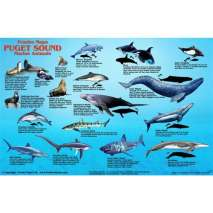 Fish & Sealife Identification Guides, Puget Sound Marine Mammals