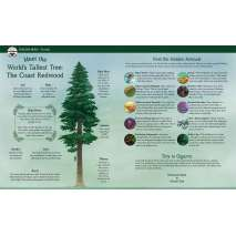 Environment & Nature :Tall Tall Tree