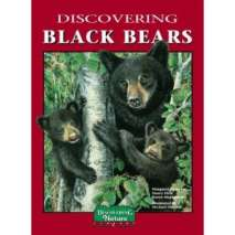 Bears, Discovering Black Bears