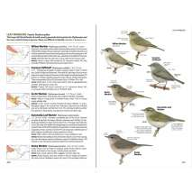 Bird Identification Guides :National Geographic Field Guide to the Birds of North America, 7th Edition