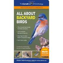Bird Identification Guides, All About Backyard Birds: Western North America