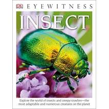 Butterflies, Bugs & Spiders :DK Eyewitness Books: Insect