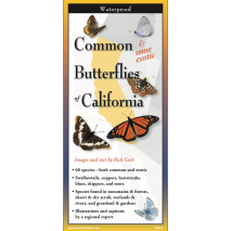 Insect Identification Guides, Common Butterflies of California