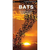 Reptile & Mammal Identification Guides, Bats: A Folding Pocket Guide to the Status of Familiar Species