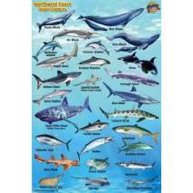 Fish & Sealife Identification Guides, Pacific Northwest Ocean & Kelp Creatures Guide LAMINATED CARD