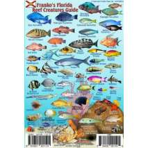 Florida Reef Creatures Guide LAMINATED CARD