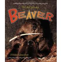Animals :The Life Cycle of a: Beaver