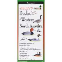 Bird Identification Guides, Sibley's Ducks, Geese,& Swans of Western N.A.