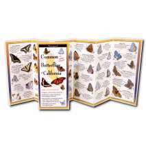 Insect Identification Guides :Common Butterflies of California