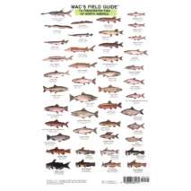 Fish & Sealife Identification Guides, Mac's Field Guides: North American Freshwater Fish