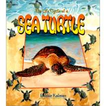 Fish, Sealife, Aquatic Creatures, The Life Cycle of a Sea Turtle