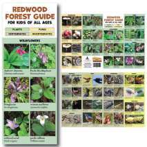 Redwoods :Redwood Forest Guide