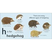 Animals :H is for Hedgehog