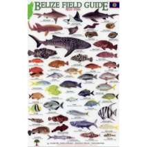 Fish & Sealife Identification Guides, Belize Field Guide, Reef Fish (Laminated 2-Sided Card)