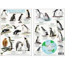 Aquarium Gift Shops, Penguins from Around the World Field Guide (Laminated 2-Sided Card)