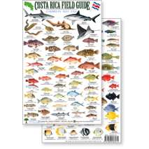 Fish & Sealife Identification Guides, Costa Rica Caribbean Reef Fish, Field Guide (Laminated 2-Sided Card)