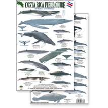 Fish & Sealife Identification Guides :Costa Rica Marine Mammals, Field Guide (Laminated 2-Sided Card)