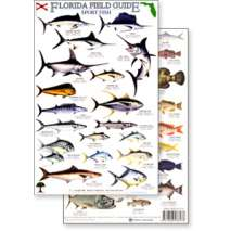Books for Aquarium Gift Shops :Florida Sport Fish Field Guide (Laminated 2-Sided Card)