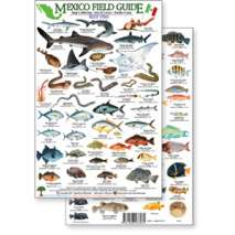 Fish & Sealife Identification Guides, Mexico Field Guide: Baja, Sea of Cortez Reef Fish (Laminated 2-Sided Card)