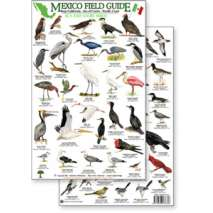 Bird Identification Guides, Mexico Field Guide: Baja, Sea of Cortez Sea & Shore Bird Guide (Laminated 2-Sided Card)