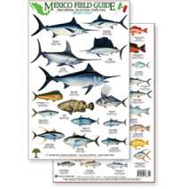 Fish & Sealife Identification Guides, Mexico Field Guide:  Baja, Sea of Cortez Sport Fish (Laminated 2-Sided Card)