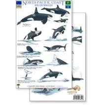 Aquarium Gift Shops, North Pacific Killer Whales & Behaviors Field Guide (Laminated 2-Sided Card)