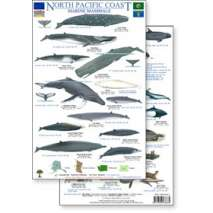 Pacific Northwest Field Guides, North Pacific Marine Mammals Guide (Laminated 2-Sided Card)