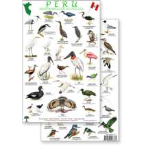 Birding, Peru Shore & Wetland Bird Guide (Laminated 2-Sided Card)