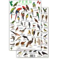 Bird Identification Guides, Peru Forest Bird Guide (Laminated 2-Sided Card)