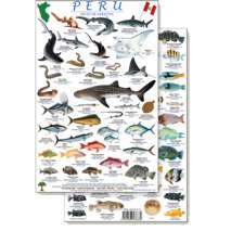 Fish & Sealife Identification Guides :Peru Reef Fish Guide (Laminated 2-Sided Card)
