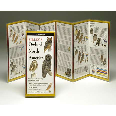 Bird Identification Guides :Sibley's Owls of North America (Folding Guides)