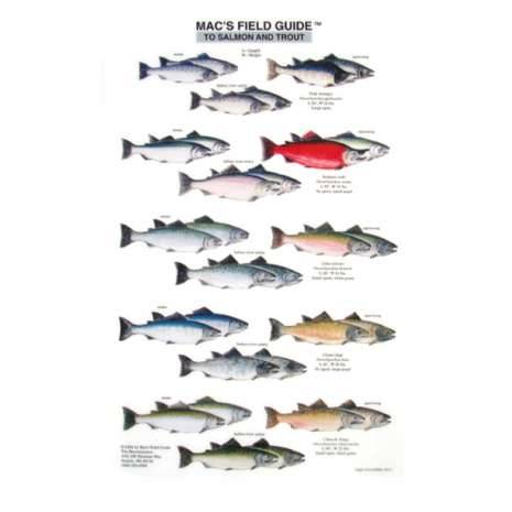 Fish & Sealife Identification Guides :Salmon and Trout of North America  (Laminated 2-Sided Card)