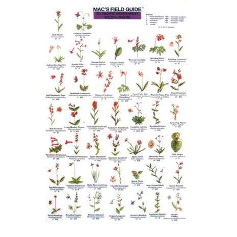 Pacific Northwest Field Guides :Pacific Northwest Wildflowers  (Laminated 2-Sided Card)
