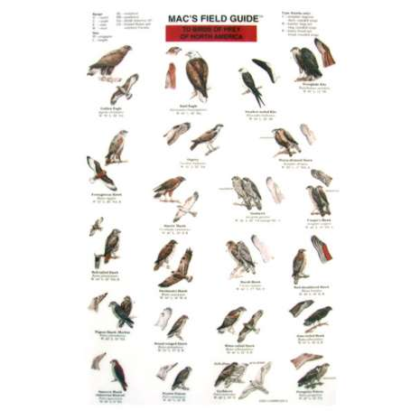 Bird Identification Guides :Birds of Prey of North America  (Laminated 2-Sided Card)