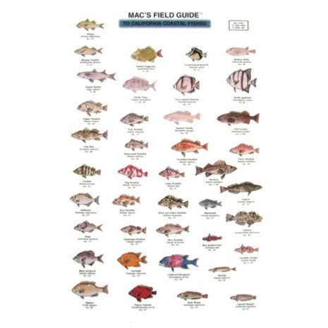Books for Aquarium Gift Shops :California Coastal Fishes  (Laminated 2-Sided Card)