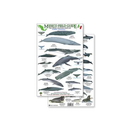 Fish & Sealife Identification Guides :Mexico Field Guide: Baja, Sea of Cortez Marine Mammal Guide (Laminated 2-Sided Card)