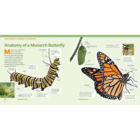 Butterflies, Bugs & Spiders :How to Raise Monarch Butterflies: A Step-by-Step Guide for Kids