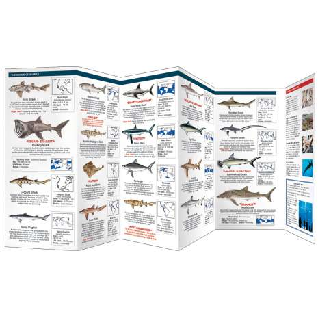 Fish & Sealife Identification Guides, The World of Sharks