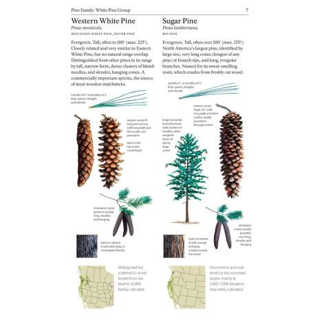 Tree, Plant & Flower Identification Guides :The Sibley Guide to Trees