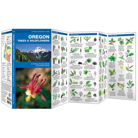 Tree, Plant & Flower Identification Guides :Oregon Trees & Wildflowers