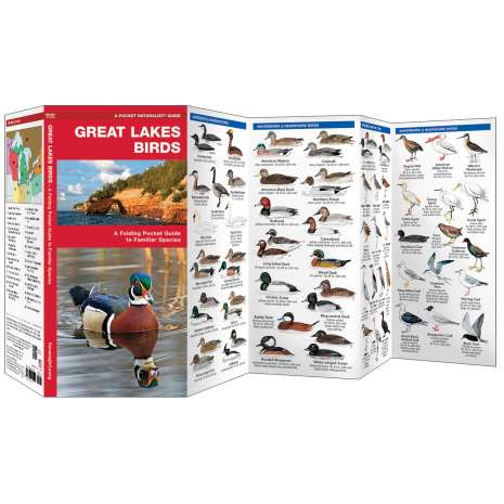 Bird Identification Guides :Great Lakes Birds
