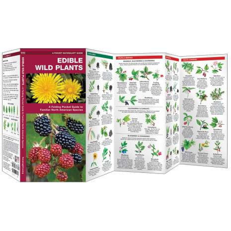Tree, Plant & Flower Identification Guides, Edible Wild Plants