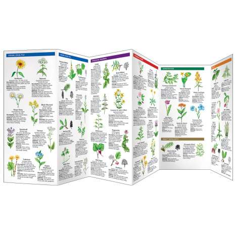 Tree, Plant & Flower Identification Guides :Medicinal Plants