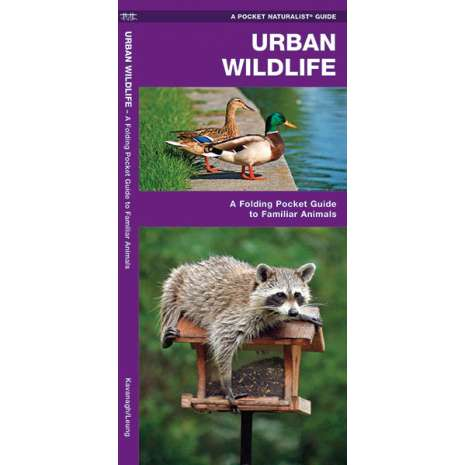 Other Field Guides, Urban Wildlife