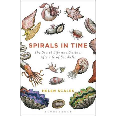 Beachcombing :Spirals in Time: The Secret Life and Curious Afterlife of Seashells