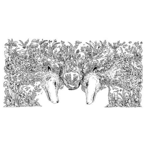 Coloring Books :Animorphia: An Extreme Coloring and Search Challenge