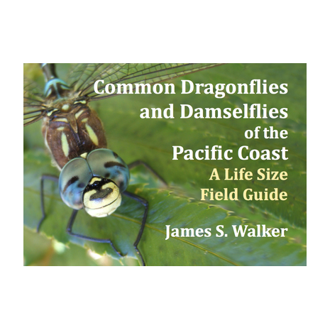 Pacific Northwest Field Guides :Common Dragonflies and Damselflies of the Pacific Coast: A Life Size Field Guide