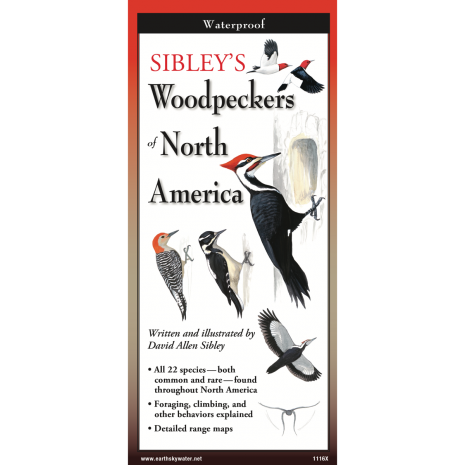 Bird Identification Guides :Sibley's Woodpeckers of North America
