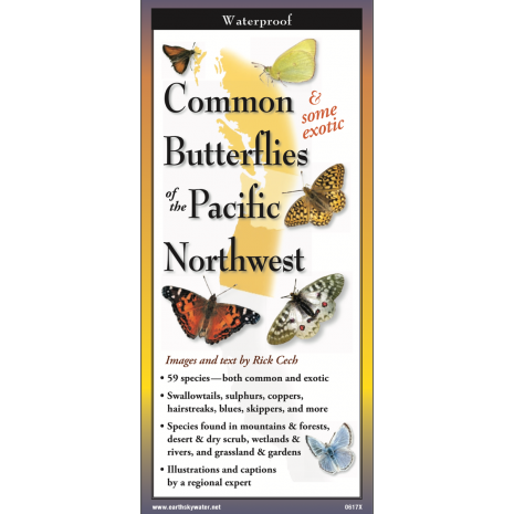 Insect Identification Guides, Common Butterflies of the Pacific Northwest