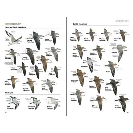 Bird Identification Guides, National Geographic Field Guide to the Birds of North America, 7th Edition